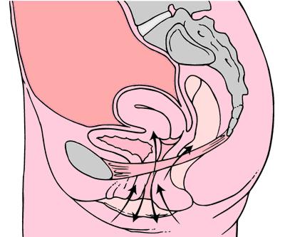 Kegelovy cviky - svalstvo u zeny