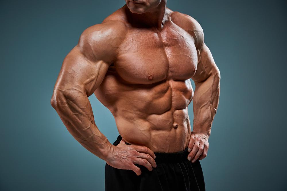 alfa samec muskulatura