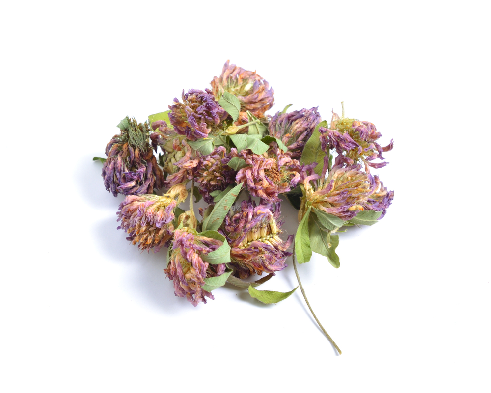 Sušené květiny jetele lučního